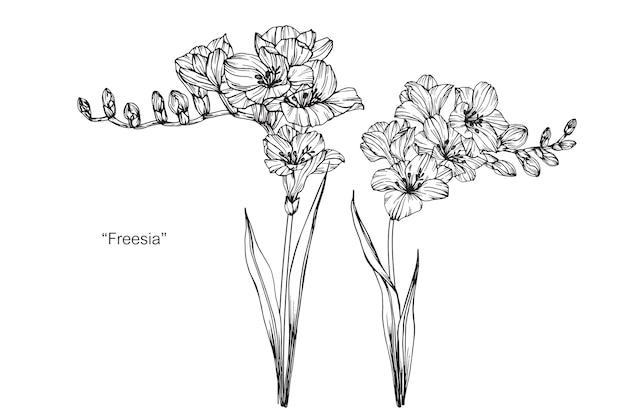 Fresia bloem