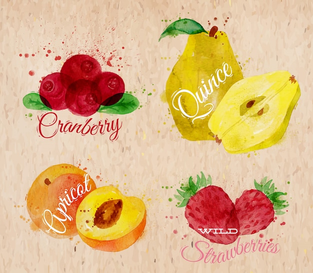 Fruit aquarel cranberry, kweepeer, abrikoos kraft