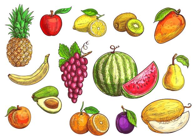 Fruit schets handgetekende banaan, appel, avocado, perzik, rode druif, citroen, sinaasappel, watermeloen, kiwi, pruim, mango peer meloen