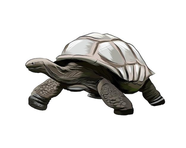 Galapagos-schildpad uit een scheutje aquarel