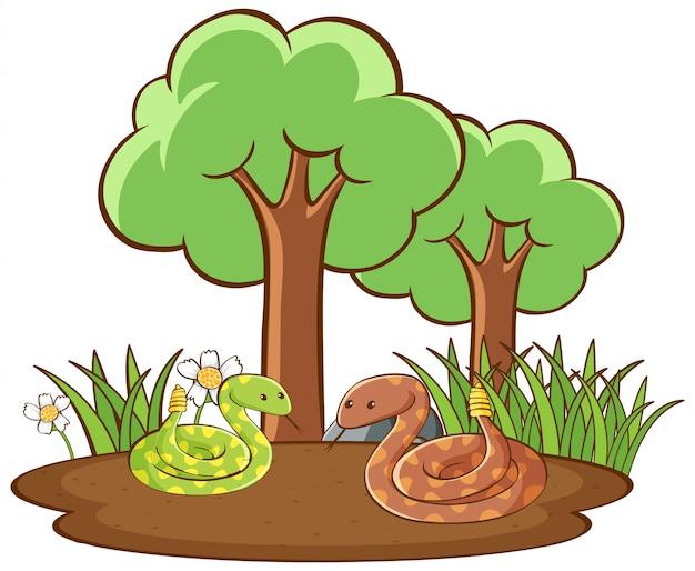 Geã¯soleerde foto van slangen op de grond