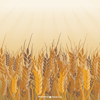Gebied van tarwe vector