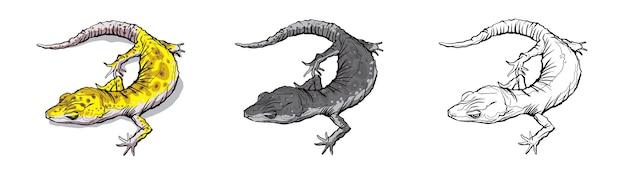 Gecko hagedis dier. reptiel in het natuurlijke wild dat op witte achtergrond wordt geïsoleerd.