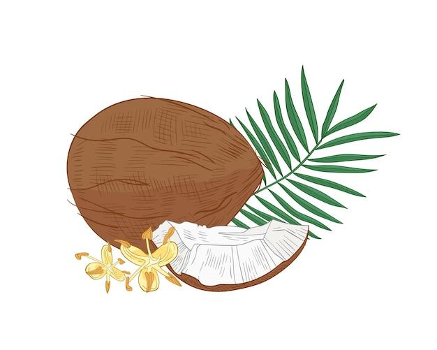 Gedetailleerde botanische tekening van kokosnoot, palmboomgebladerte en bloeiende bloemen die op wit worden geïsoleerd