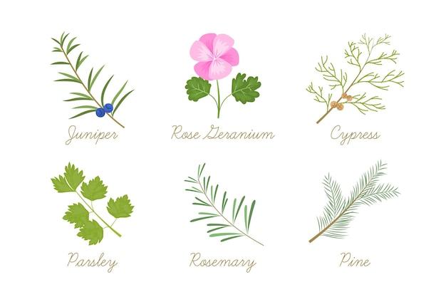 Gedetailleerde collectie etherische olieplanten