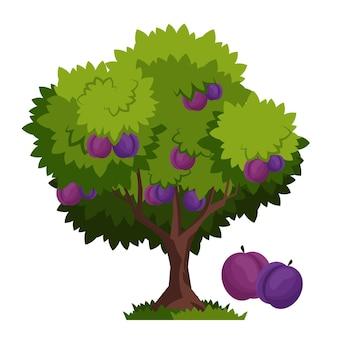 Gedetailleerde pruimenboom illustratie