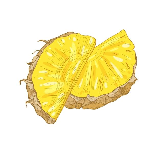 Gedetailleerde realistische tekening van verse organische ananasplakken die op witte achtergrond worden geïsoleerd.