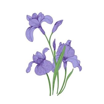 Gedetailleerde tekening van iris lentebloemen en knoppen.