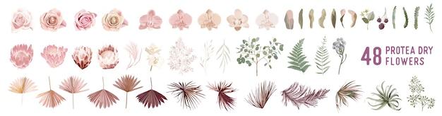 Gedroogd pampagras, roos, protea, orchideebloemen, tropische palmbladeren vectorboeketten. pastel aquarel bloemen sjabloon geïsoleerde collectie voor bruiloft krans, boeket frames, design decoratie