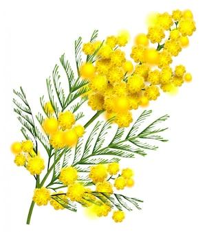Geel de taksymbool van de mimosabloem van de lente die op wit wordt geïsoleerd