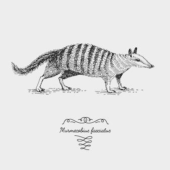 Gegraveerde, hand getekende illustratie in houtsnede scratchboard stijl, vintage tekening soorten.