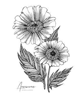 Gegraveerde handgetekende illustraties van anemoon.
