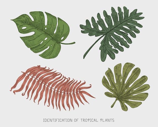 Gegraveerde, handgetekende tropische of exotische bladeren, blad van verschillende vintage uitziende planten. monstera en varen, palm met bananen plantkunde set