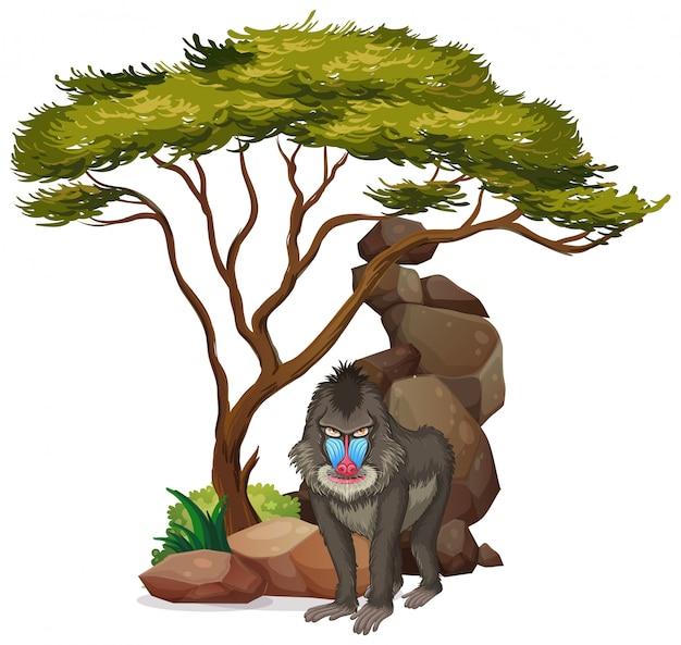 Geïsoleerd beeld van baviaan onder de boom