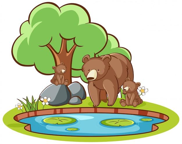 Geïsoleerd beeld van grizzlyberen door de vijver