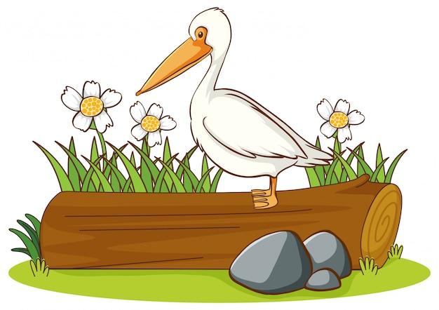 Geïsoleerd beeld van pelikaanvogel op logboek