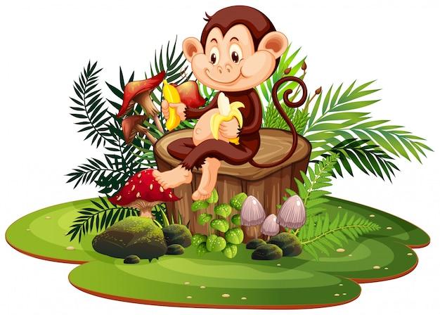 Geïsoleerde aap in de natuur