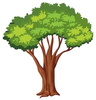 Geïsoleerde boom witte achtergrond
