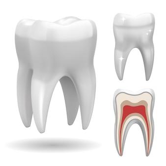 Geïsoleerde driedimensionale tand, met front- en gesneden versie