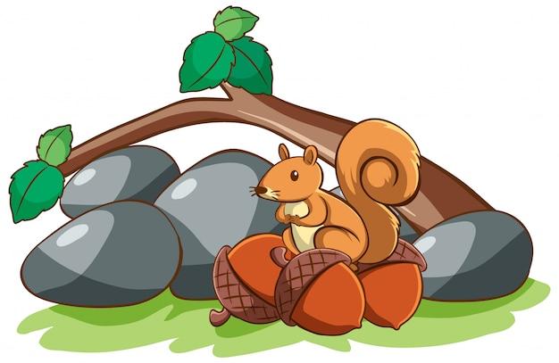 Geïsoleerde eekhoorn en noten