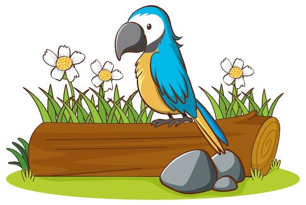 Geïsoleerde foto van blauwe papegaai