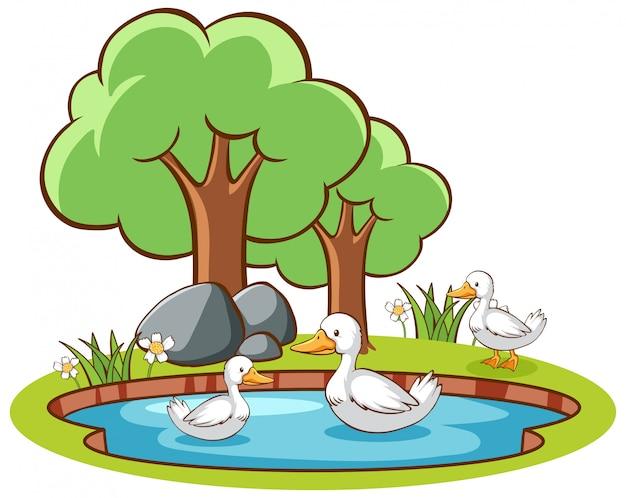 Geïsoleerde foto van eenden in de vijver