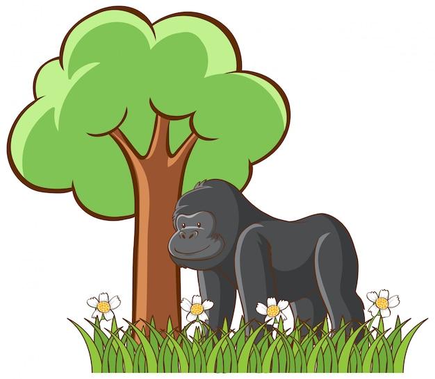 Geïsoleerde foto van gorilla