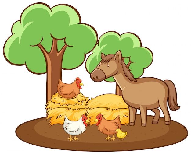 Geïsoleerde foto van kip en paard