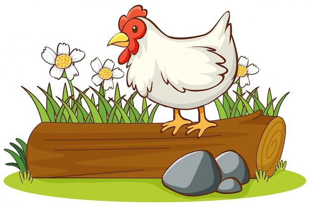 Geïsoleerde foto van kip op het logboek