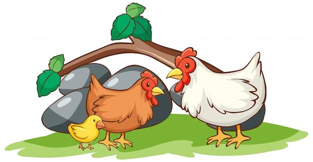 Geïsoleerde foto van kippen in de tuin