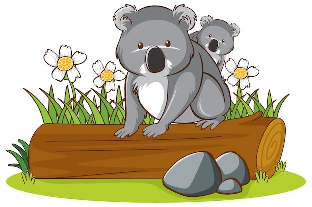 Geïsoleerde foto van koala op logboek