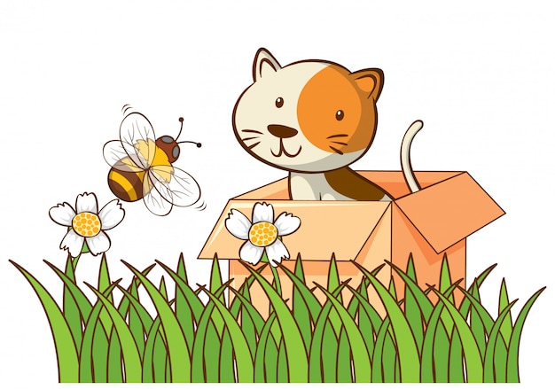 Geïsoleerde foto van schattige kat in de doos
