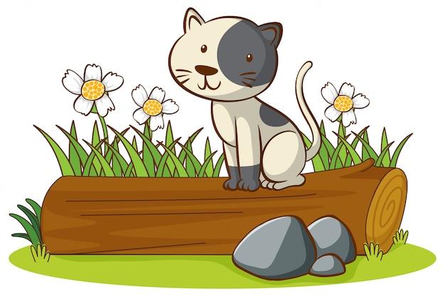 Geïsoleerde foto van schattige kat op logboek