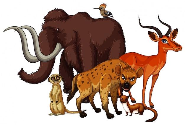 Geïsoleerde foto van veel dieren