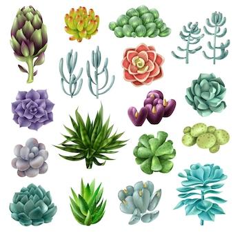Geïsoleerde gekleurde vetplanten