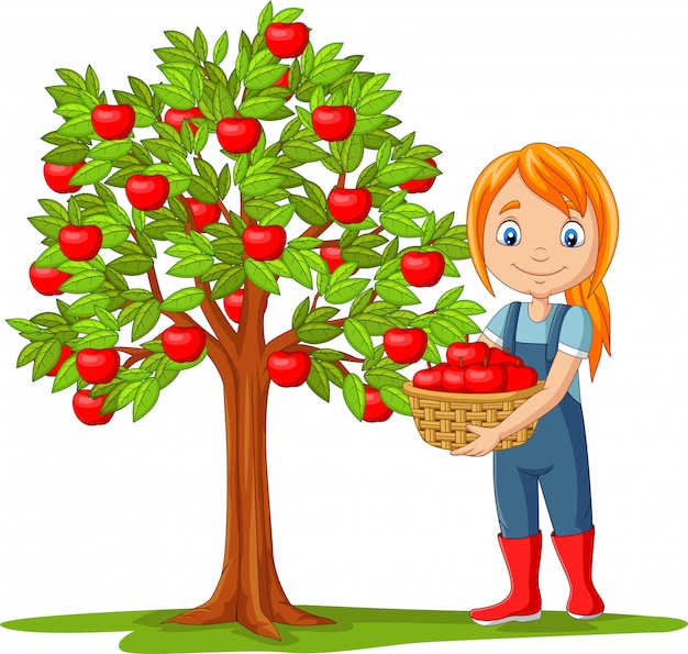 Geïsoleerde meisjeslandbouwer die appelen in mand verzamelt