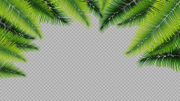 Geïsoleerde palmbladen, achtergrond
