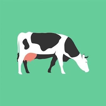 Geïsoleerde platte koe