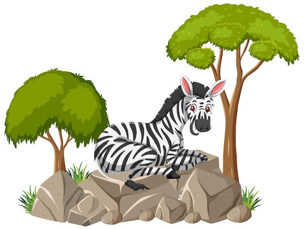 Geïsoleerde scène met een zebra die op steen legt