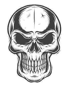Geïsoleerde schedel op wit