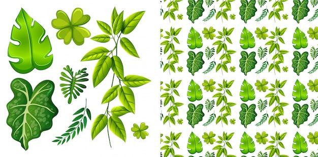 Geïsoleerde set bladeren