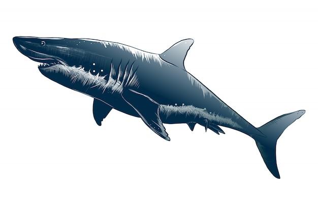 Geïsoleerde tekening van haai in blauwe kleur.