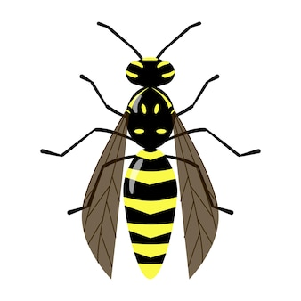 Geïsoleerde vector wesp op de witte achtergrond. bijen karakter. gele en zwarte stekende insecten kleurrijke illustratie.