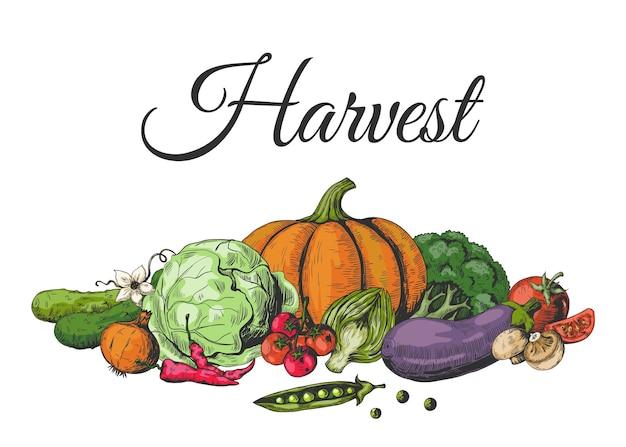 Gekleurde getekende groenten. gekleurde voedselschetscollectie, gezonde veganistische tuingroente.