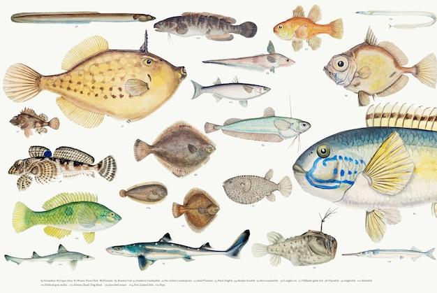Gekleurde vectorillustratie van de inzameling van de vissentekening