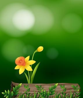 Gele bloem in de tuin