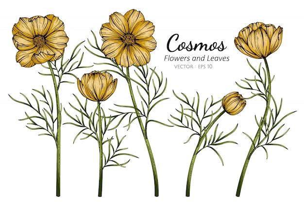 Gele kosmosbloem en bladtekeningillustratie met lijntekeningen op witte achtergronden.