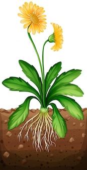 Gele madeliefjeinstallatie in de grond