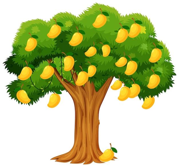 Gele mangoboom die op wit wordt geïsoleerd