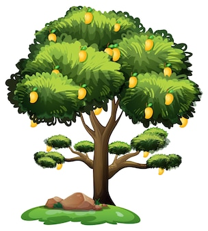 Gele mangoboom die op witte achtergrond wordt geïsoleerd